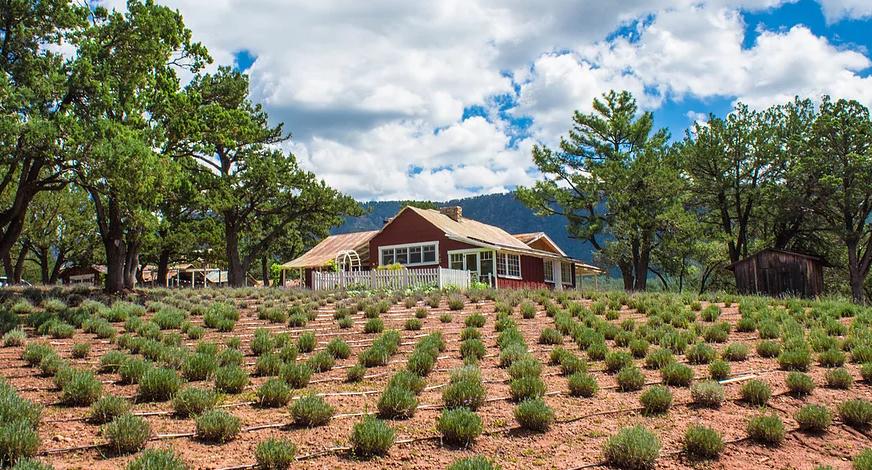 Pine Creek Lavender Farm